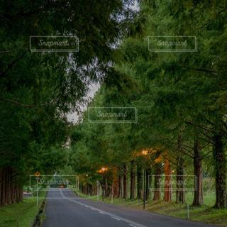 通り側の木と空の道の写真・画像素材[720657]