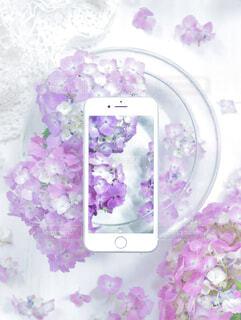 紫陽花の季節の写真・画像素材[4260424]