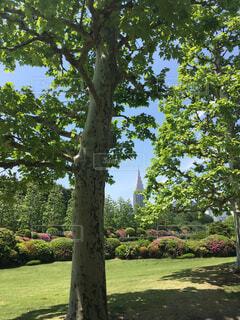 公園の木の写真・画像素材[4268890]