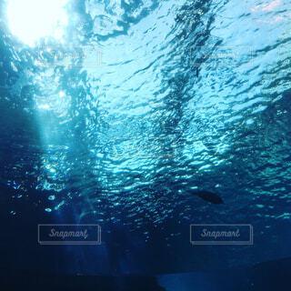 水中の写真・画像素材[4268909]