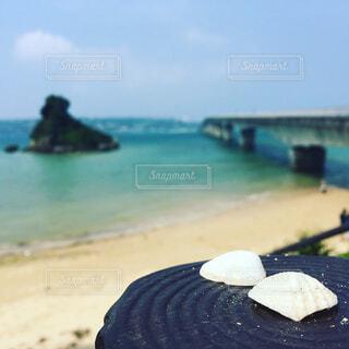 貝殻と海と橋の写真・画像素材[4268913]