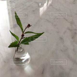 小さな花瓶に挿した花の写真・画像素材[4268928]