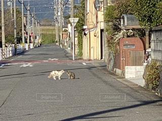 路上のネコのケンカの写真・画像素材[3632744]