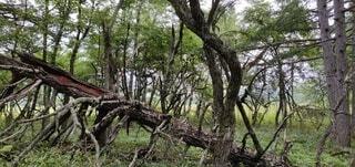 腕立てでもしてるかのような木の写真・画像素材[4281680]