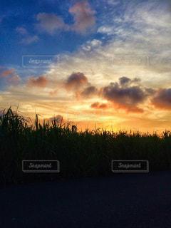 さとうきび畑と夕焼けの写真・画像素材[856687]