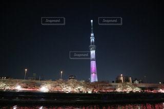 夜桜とスカイツリーの写真・画像素材[1092233]