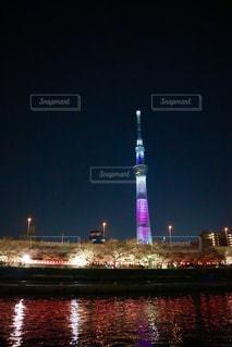 夜桜とスカイツリーの写真・画像素材[1092234]