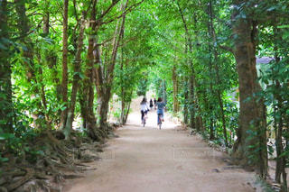 並木道をサイクリングの写真・画像素材[2708728]