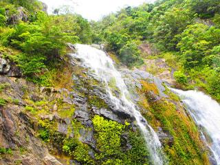 森の中の滝の写真・画像素材[4277700]