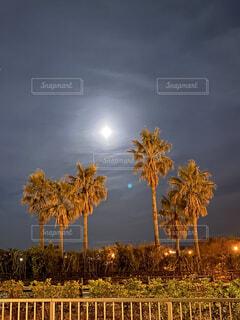 木の隣にあるヤシの木の群の写真・画像素材[4280120]
