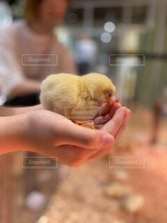 赤ん坊を抱く手の写真・画像素材[4280237]