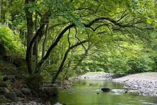 川原の新緑の写真・画像素材[4283666]