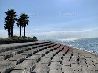 ヤシの木と海の写真・画像素材[4815783]