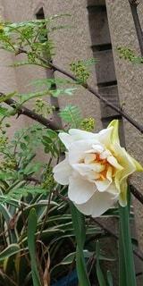 変わった花達のコラボの写真・画像素材[4294493]