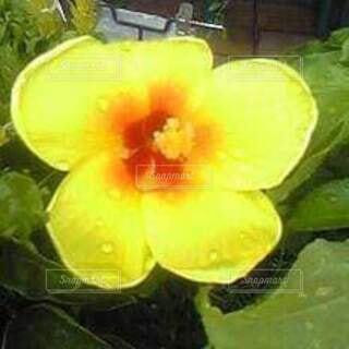 お花の写真・画像素材[4301724]