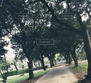 なじみの公園の写真・画像素材[4308183]