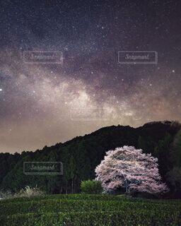 緑の草で満たされた空の写真・画像素材[4296479]