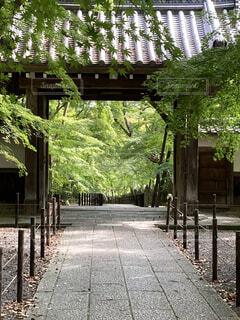 緑の季節の山門の写真・画像素材[4301482]