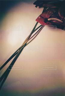 花の写真・画像素材[185268]