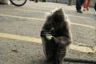 猿の写真・画像素材[4305406]