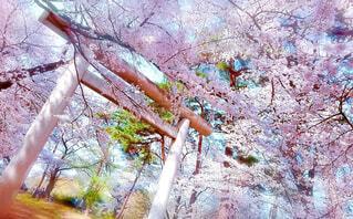 木のクローズアップの写真・画像素材[4304477]
