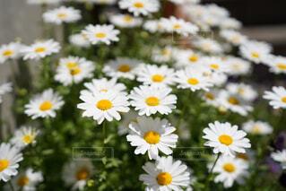 花の写真・画像素材[4362456]