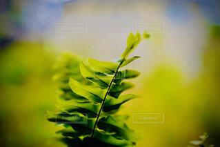 グリーンの写真・画像素材[4460839]