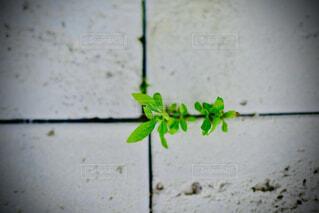 緑のドアのクローズアップの写真・画像素材[4465768]