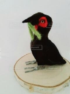 話題になったミナミジサイチョウの羊毛フェルト作品の写真・画像素材[4552854]