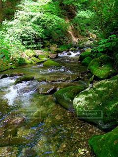 渓流の写真・画像素材[4304835]