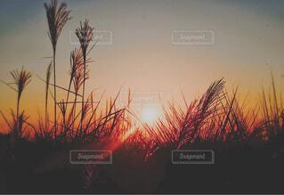 秋の夕暮れの写真・画像素材[4527098]