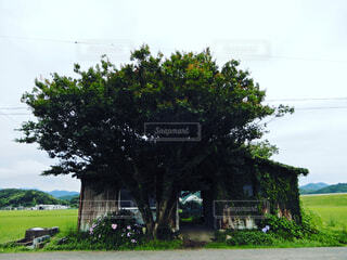 木の中の小屋の写真・画像素材[4307820]