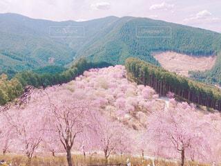 桜の写真・画像素材[4372265]