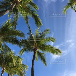 南国の空の写真・画像素材[4387979]