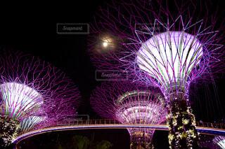 美しく光るガーデンズ バイ ザ ベイ ,シンガポールの写真・画像素材[4320317]
