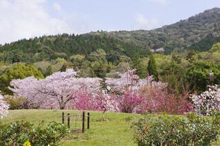 桜が映える風景の写真・画像素材[4326853]