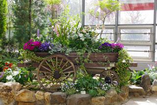 春の花車の写真・画像素材[4328838]