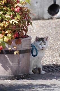 日向ぼっこの猫の写真・画像素材[4334693]