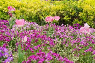 花の共演の写真・画像素材[4371319]