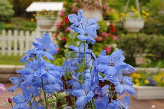 優しい青い花の写真・画像素材[4376732]