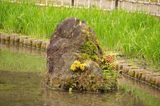 池の中に岩の写真・画像素材[4388596]