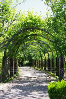 緑のトンネルの写真・画像素材[4403365]
