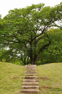 階段の先には?の写真・画像素材[4412709]