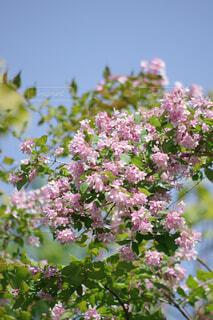 青空とピンク色の花の写真・画像素材[4412711]