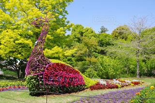 花でできた孔雀の写真・画像素材[4425569]