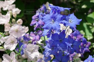 青紫の花びらの写真・画像素材[4512899]