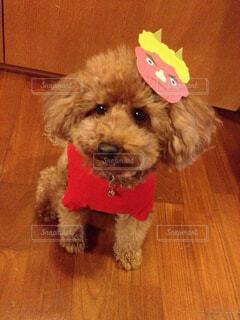 鬼の仮面つけた犬の写真・画像素材[4340074]