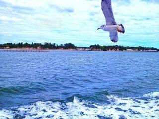 船に近寄ってくるカモメの写真・画像素材[4386660]