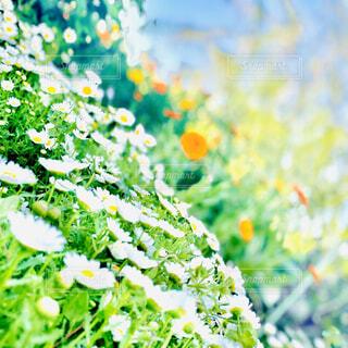 斜め構図の花の写真・画像素材[4326415]
