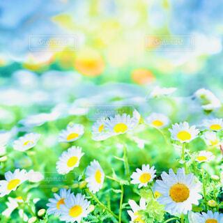 春の花の写真・画像素材[4326417]
